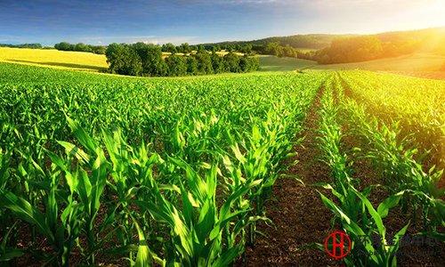 农资营销的5大策略方案!
